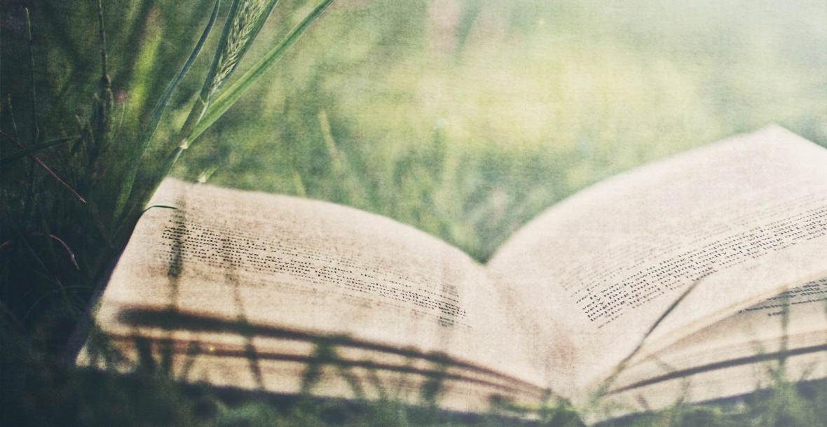 open book on green grass summer